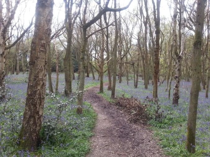 22 April - Bluebell path