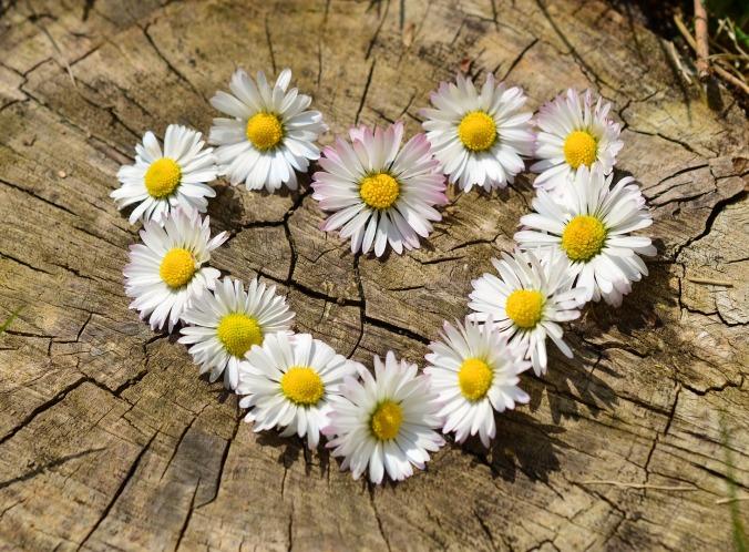 Daisy shaped heart