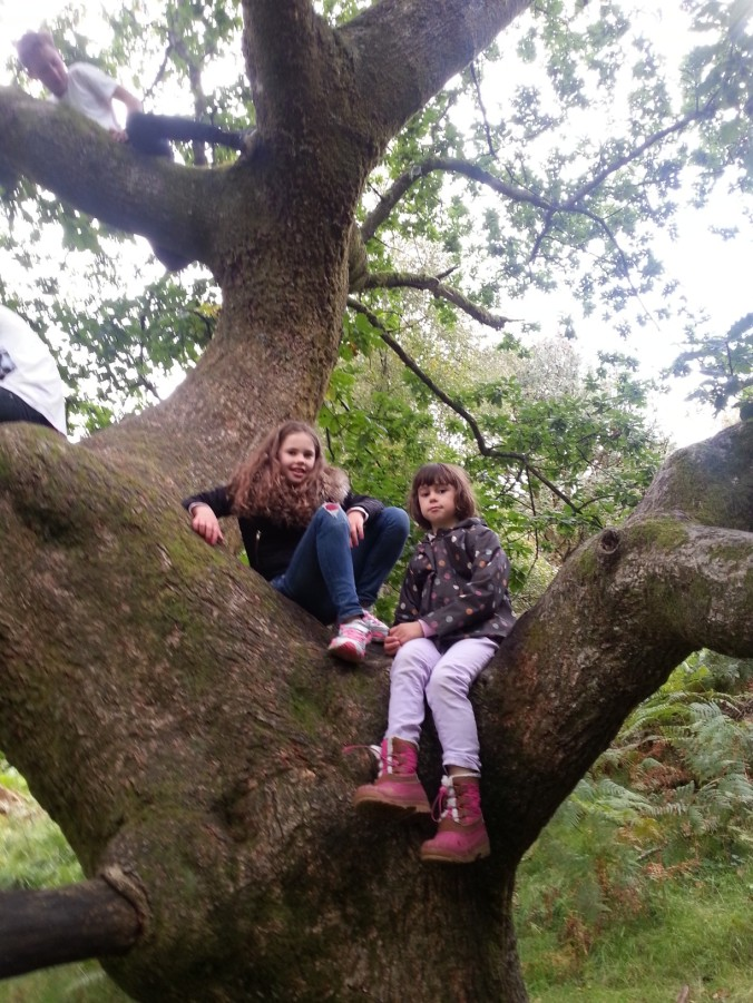 Climbing tree at Tarn Hows