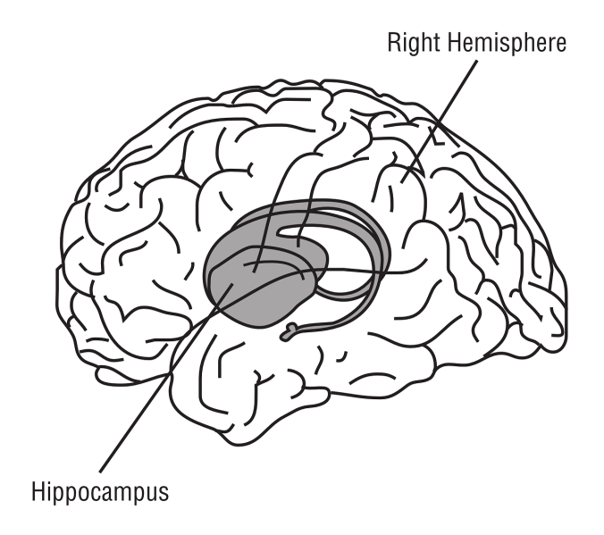 wandering-mind-hippocampus
