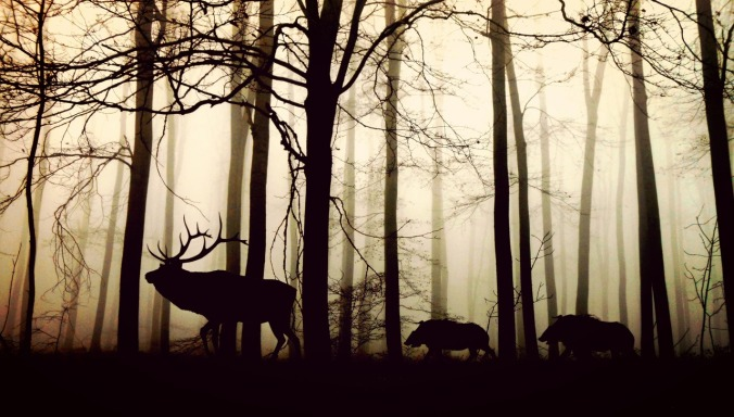 forest-stag-and-boars
