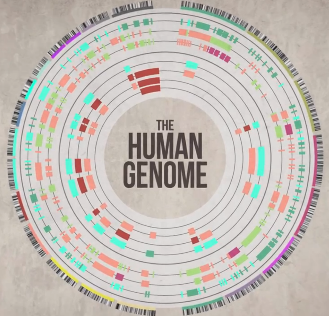 How does the dna effect the sex of a human