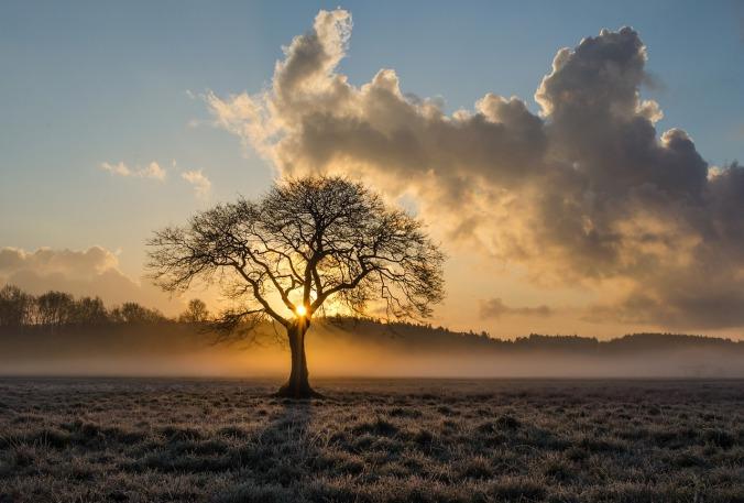 vulnerability-lone-tree